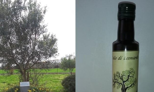 L'olio di Leonardo, dalle olive dei Giusti