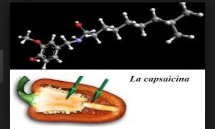 Capsaicina, il lato piccante del peperoncino
