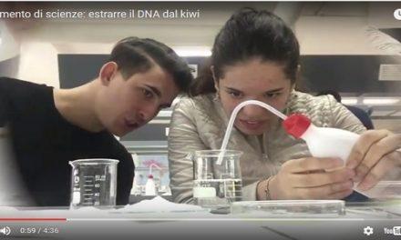 Il kiwi e la 5° F, alla ricerca del DNA