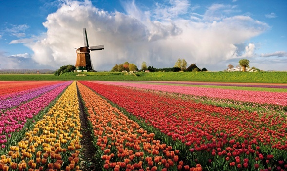 "Olanda, la ""fioriera del mondo"""