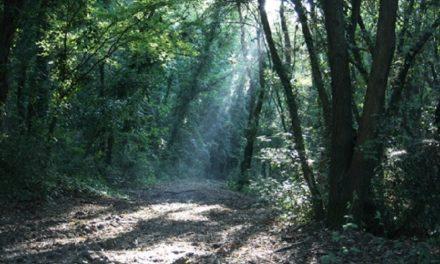 La novità di Fregene: il nuovo Parco Avventura