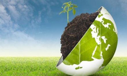 Dalla fotosintesi all'energia chimica, un successo italiano