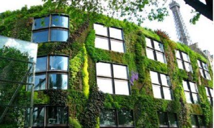 Orti e giardini verticali, la soluzione giusta!