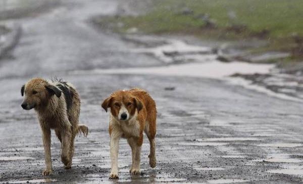 Gli animali sono sempre al tuo fianco… e tu cosa fai, li abbandoni?