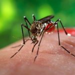 La zanzara, l'animale più letale del mondo