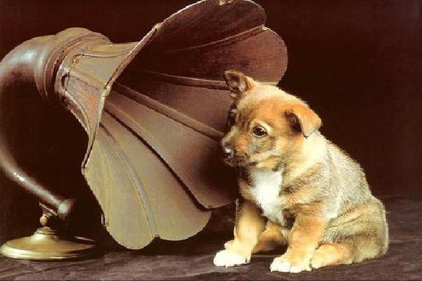 Zoomusicologia: come gli animali sentono la musica
